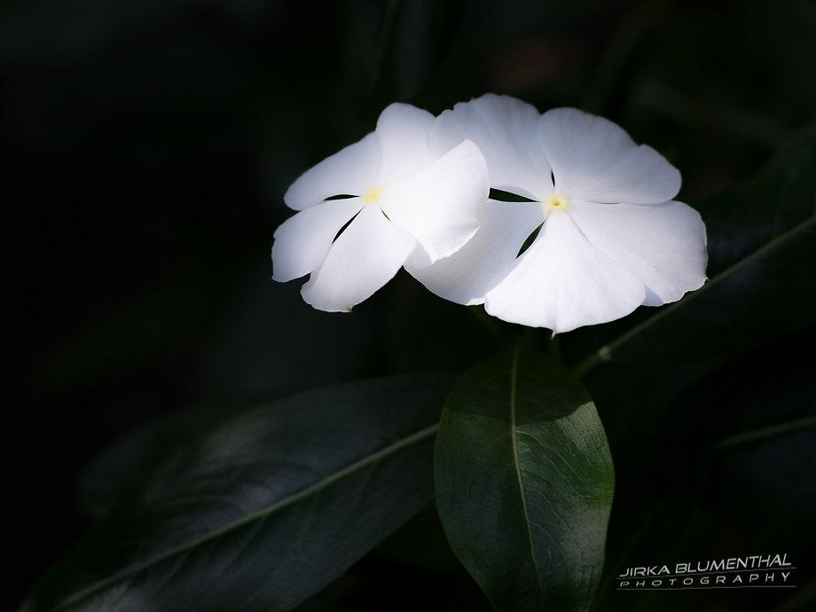 Blüte #1